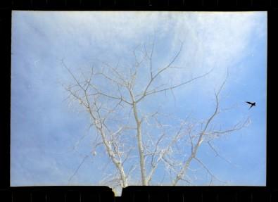 Matt Jones 2_2 Lomo simple use - kodak Portra 400 35mm